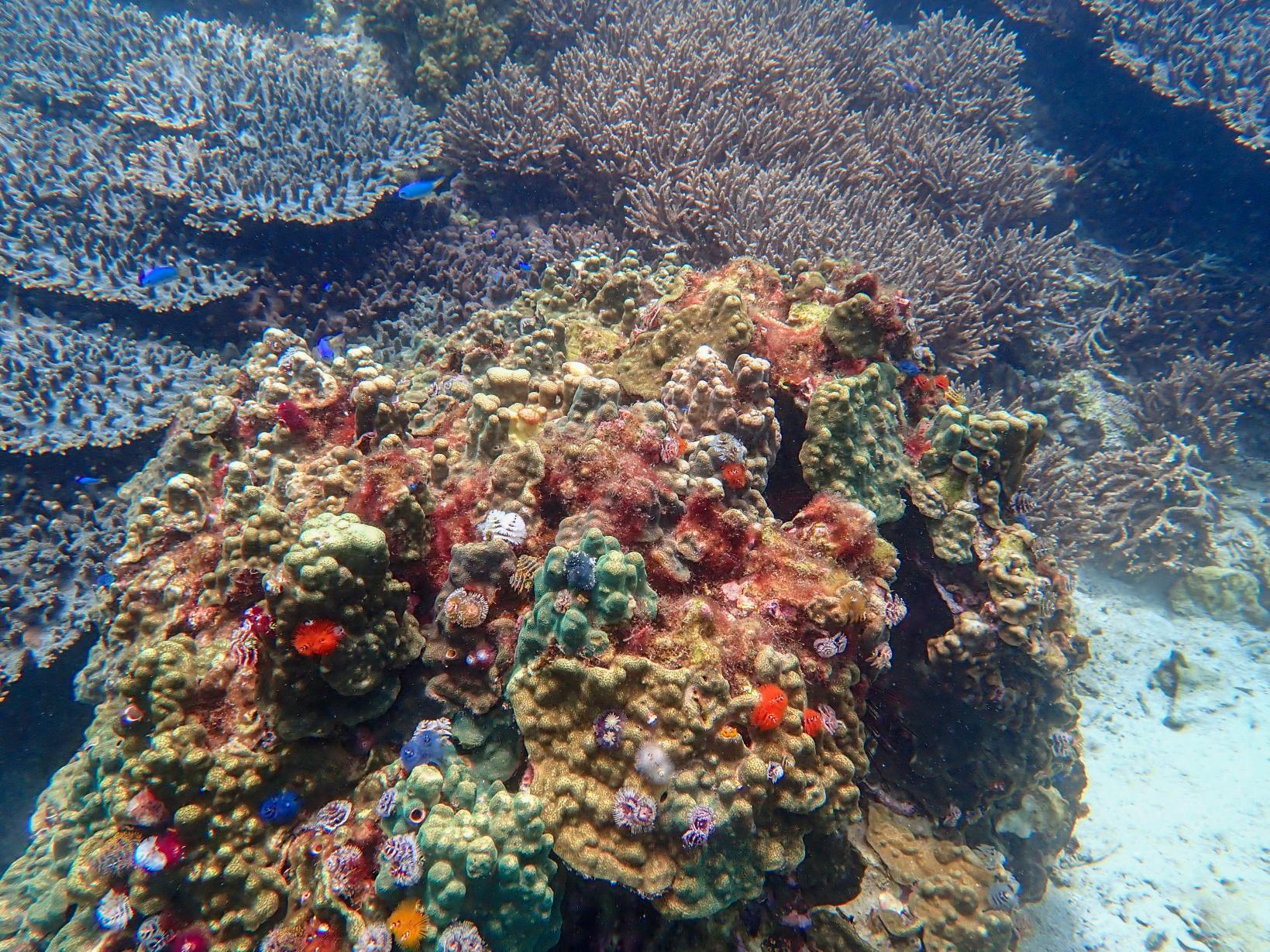 ニモに会えるかもしれない!海中も美しい五島の海でシュノーケリング-1