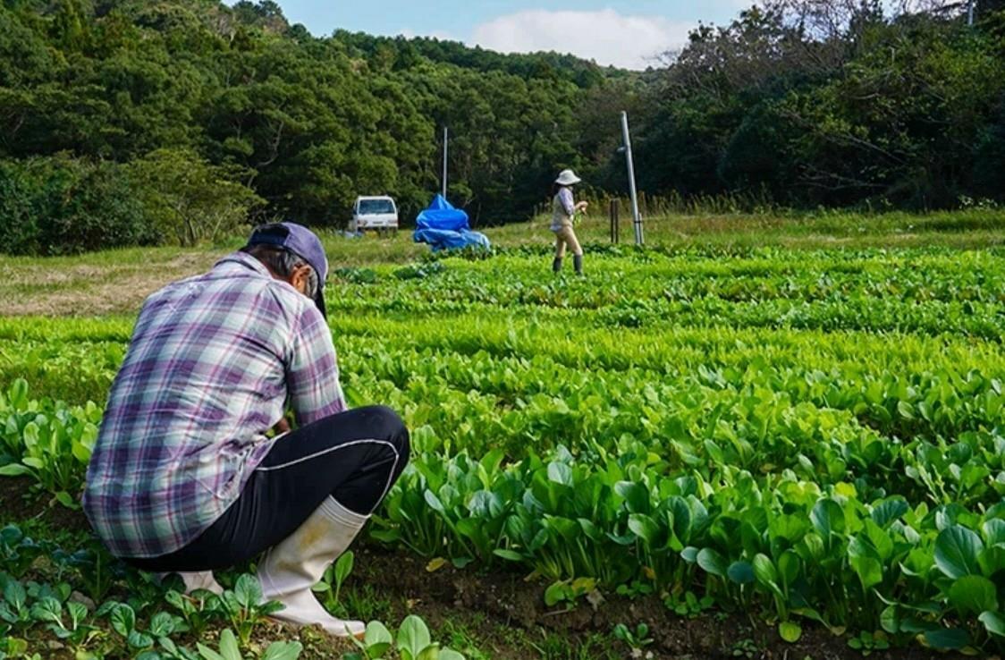 ねこたま ぷらっと農園-0