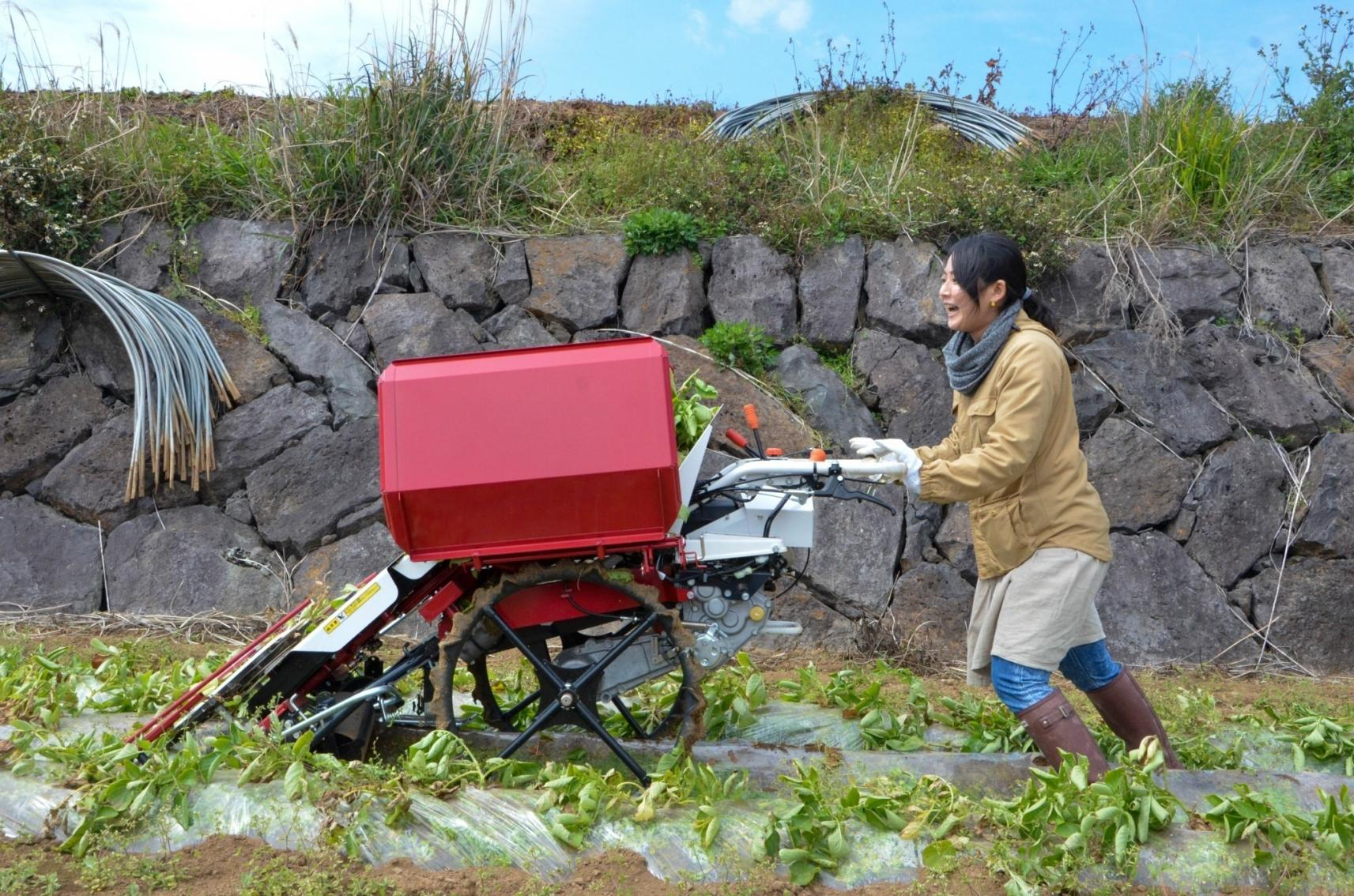 五島のやぁしゃ便 農業体験-2