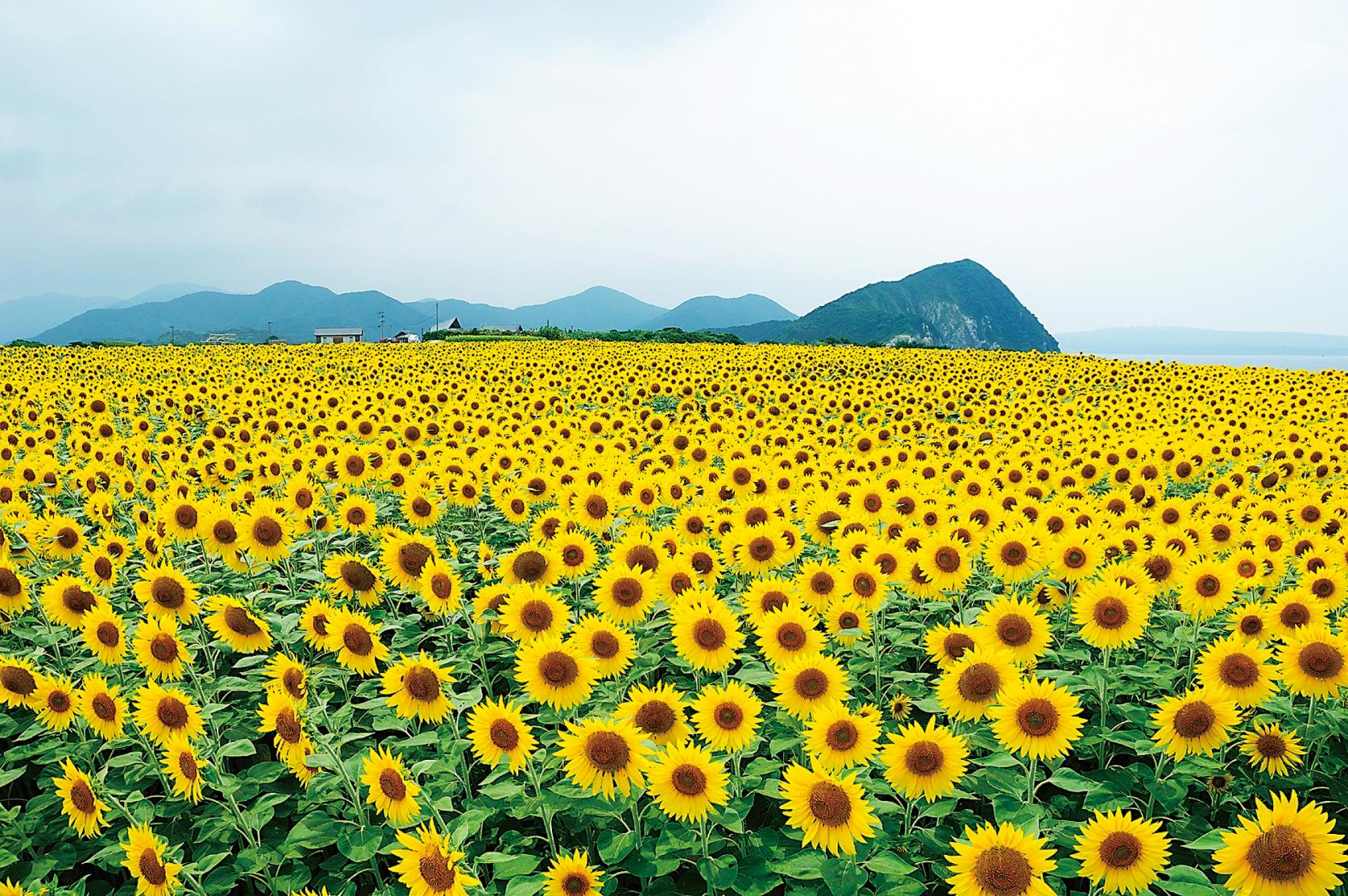 絶景のフラワーロードと日本遺産コース-1