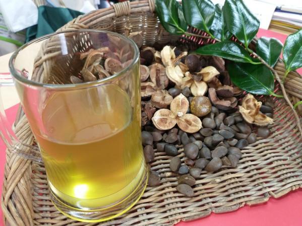 椿油作り体験-0